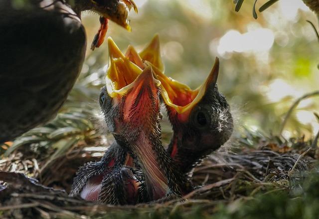 Sementes, aves e ninhos