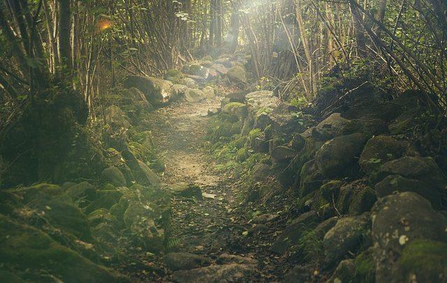 Seguir Jesus nos caminhos da vida