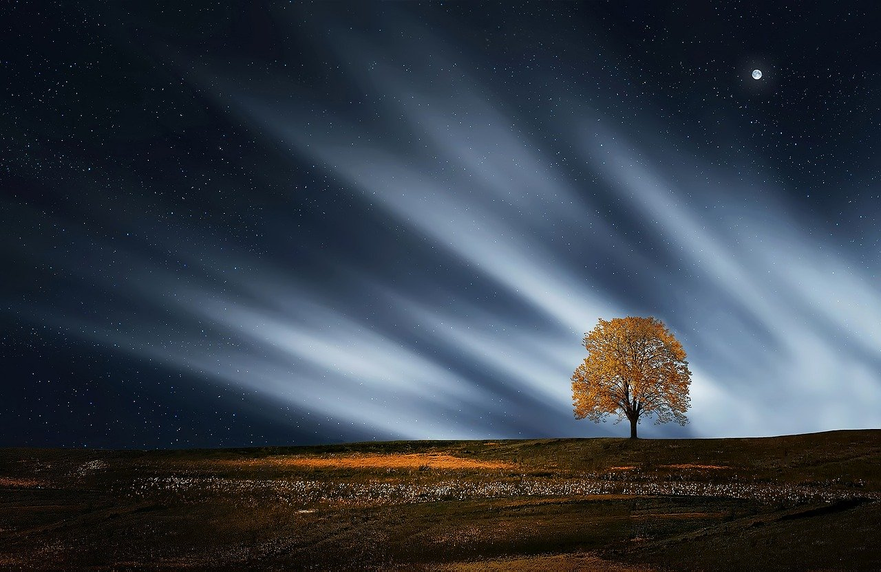 tree-736882_1280