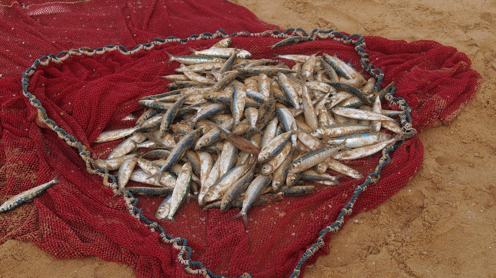 fishing-net-1003351_1920
