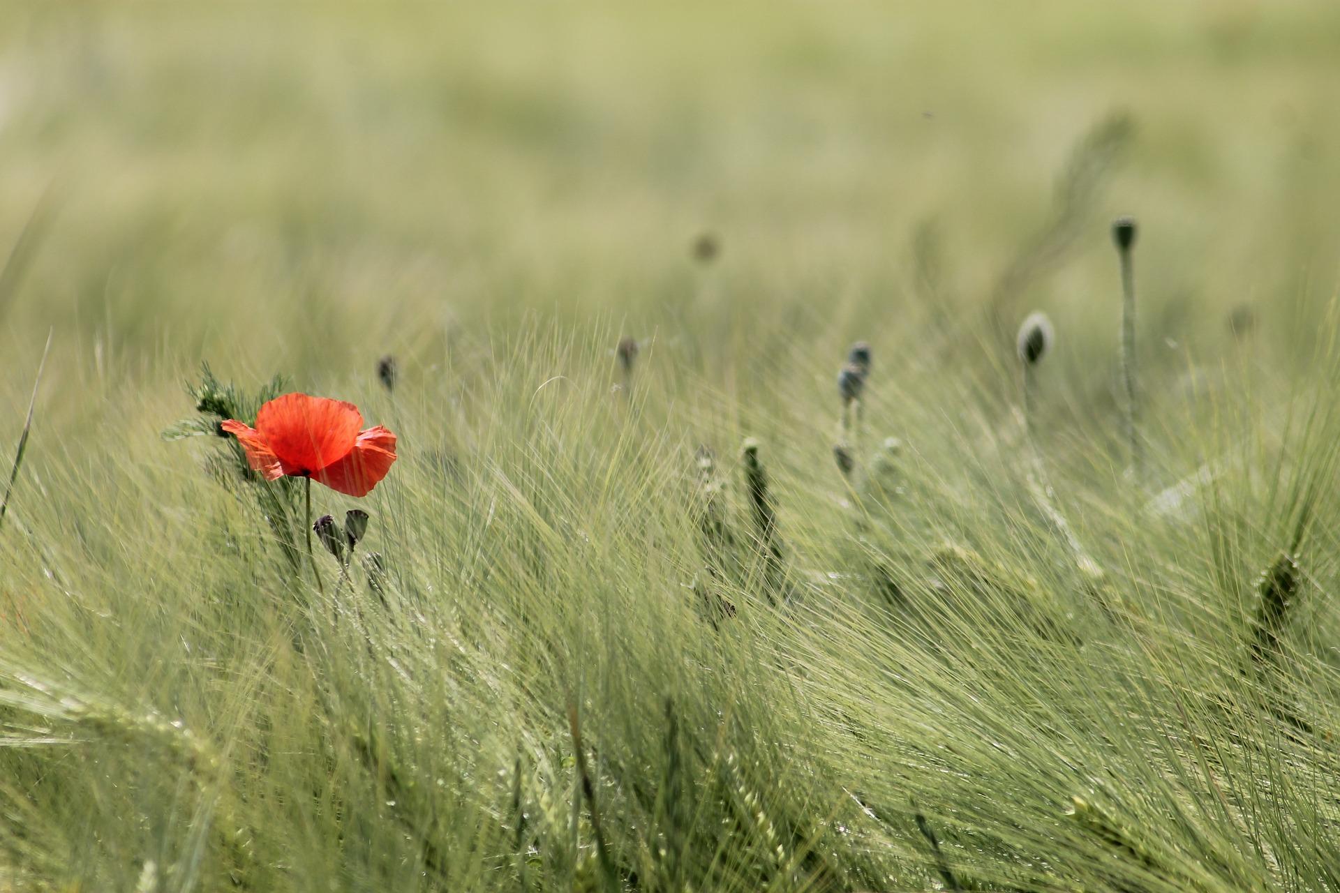 meadow-2369422_1920