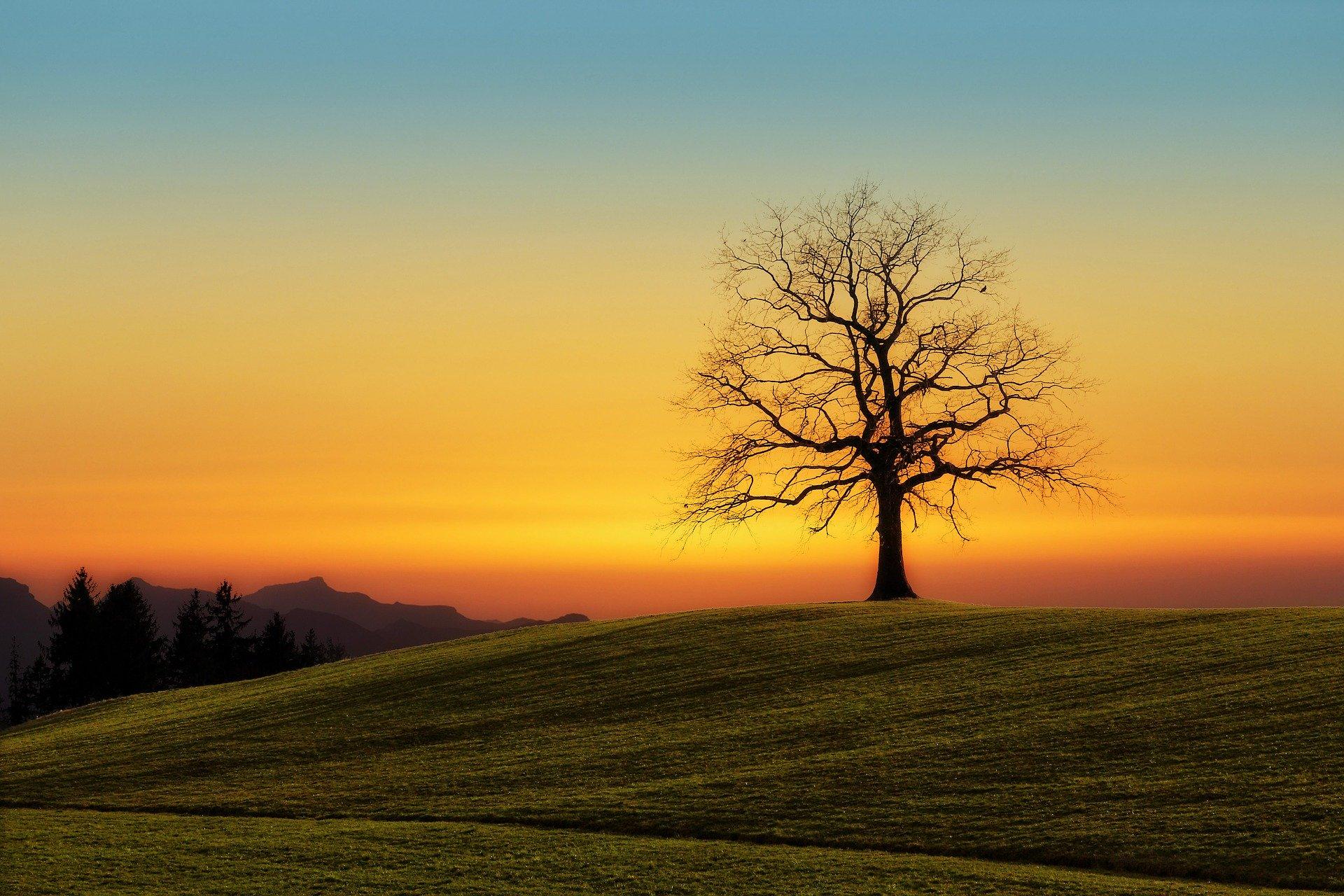 tree-3072431_1920