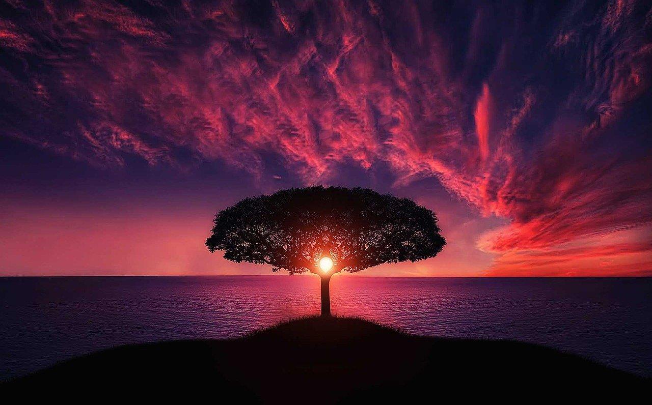 tree-736885_1280 (2)