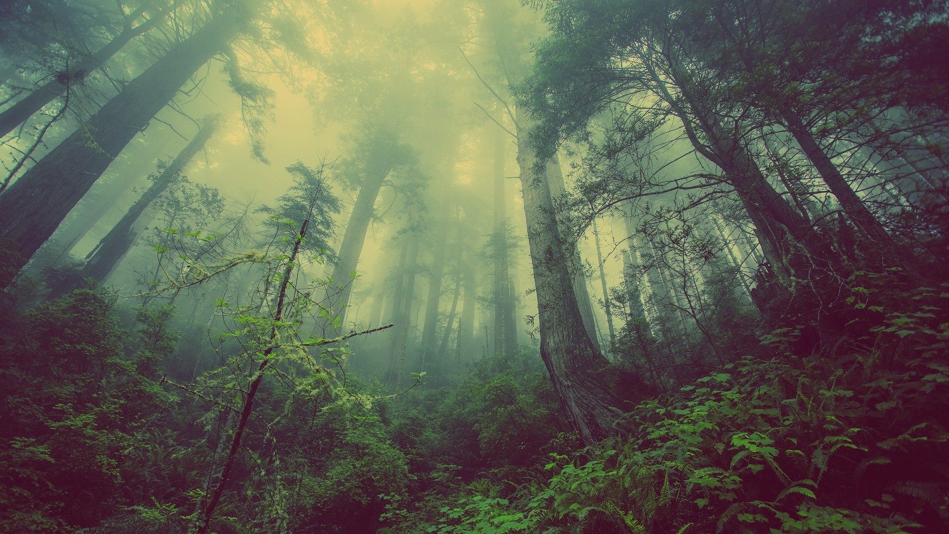forest-931706_1920