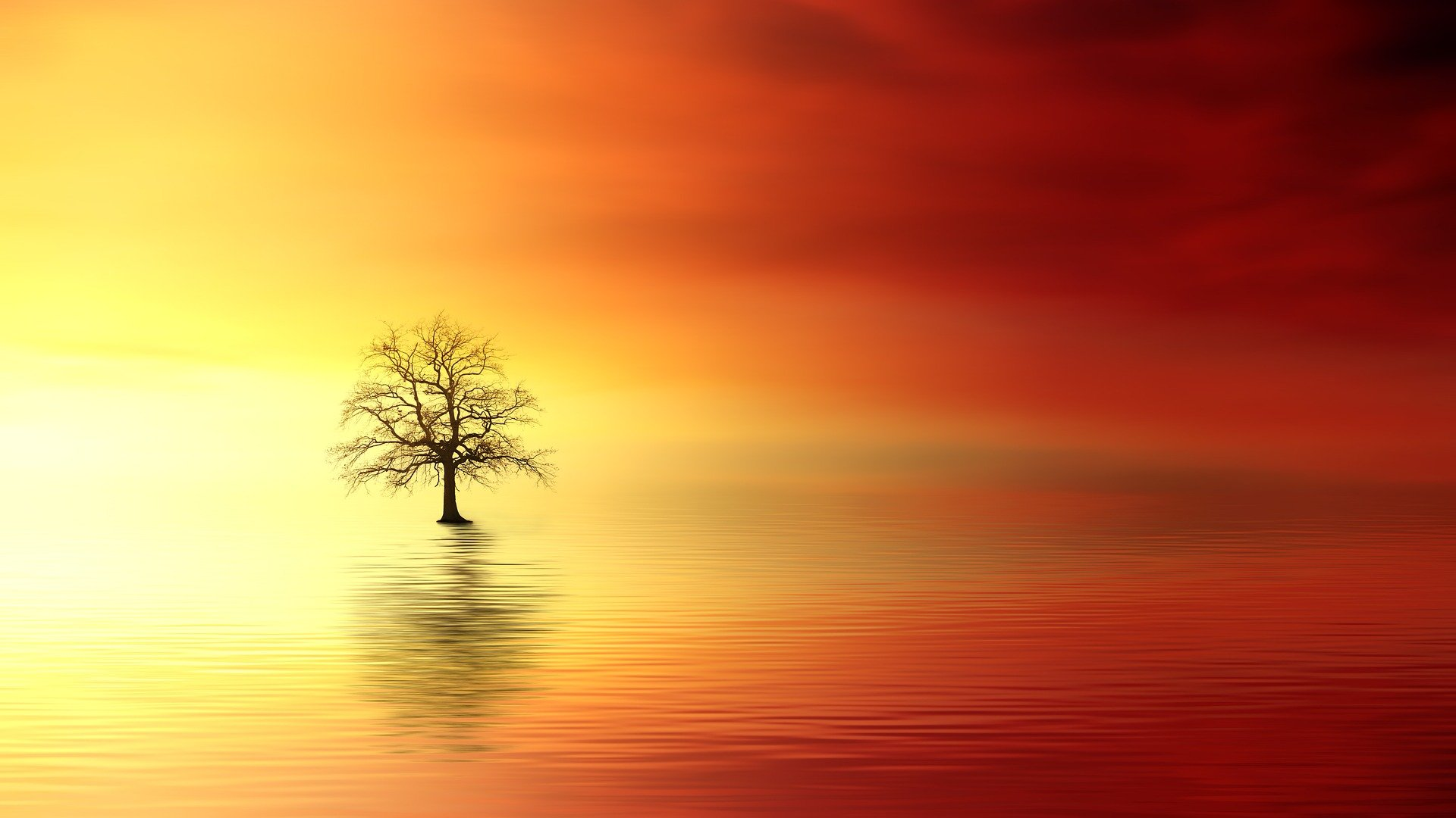 sunset-3156440_1920 (1)