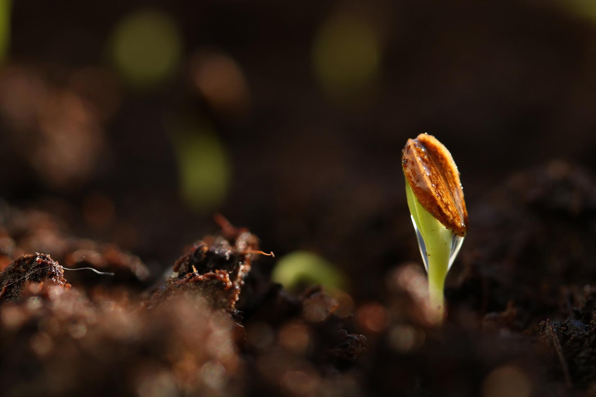 seed-3944361_1920