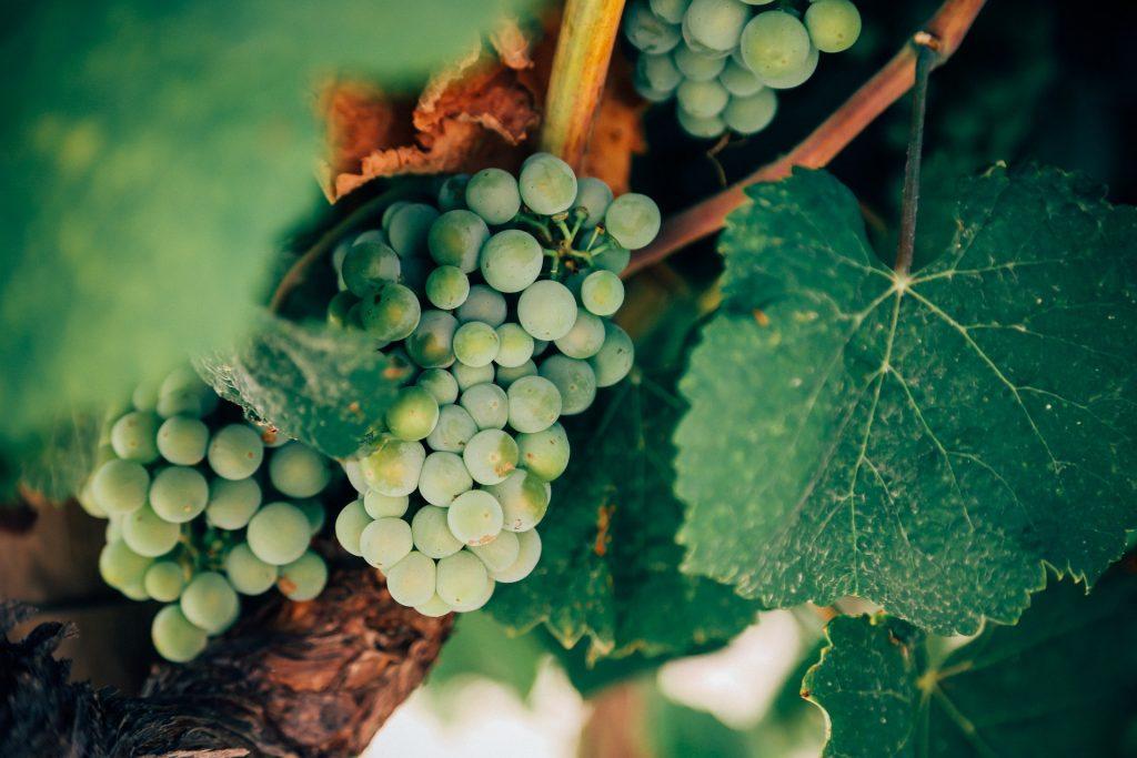 grapes-1245739_1920